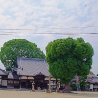 常光寺(八尾)  2017.06.23