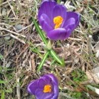 春が来ましたよ