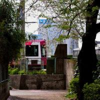 都電散歩 桜絨毯と桜簾
