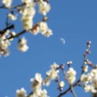 今日は立春 -磯子ヴィレッジ-