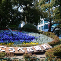 初春の神戸 (2)