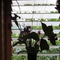 家に生け花を。