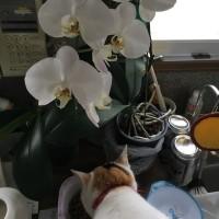 ランの花とミーコの頭