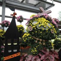 花の郷、ハロウィン
