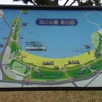横浜金沢八景散歩画像 K猫