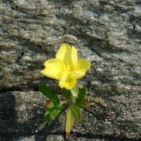 flowerです