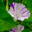 多摩川河川敷、花。