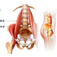 腸腰筋のリリース方法      金沢市   慢性腰痛専門    整体院   樹