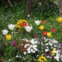 春爛漫と色鉛筆作品紹介メモ448 と エホバの証人に気に入られる私