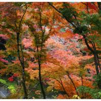 京都 2016 秋 5
