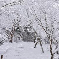 牧ノ戸峠の冬模様7・・・【いな】