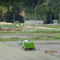 田植えをした。ほっとした。