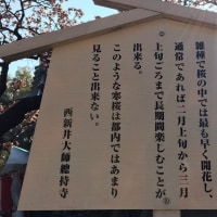 1月22日・・西新井太師 新年の祈願に・・晴れ~