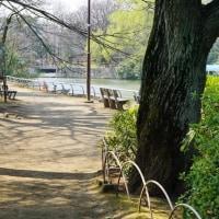 陽射しが眩くなった武蔵関公園 その1