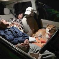 鳥取地震、愛犬と車中泊