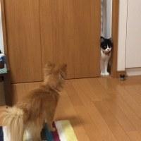 猫に出会って、歌ができた