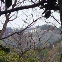 廿日市市 折敷畑山登山(3) 登頂後下山