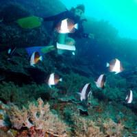 Koh Bon West Ridge - Similan, Andaman Sea, Thailand - ウエストリッジ、ボン島