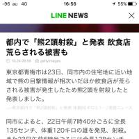 ク…熊ε=ε=ε=ε=ε=(;゚ロ゚)ダダダッ!!