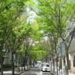 緑の並木探訪:関西地方Ⅰ