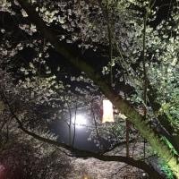 イ・ジョンソク インスタ更新 夜桜