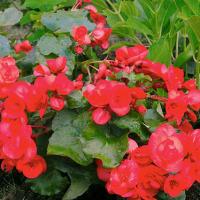 初夏の庭の花(2)