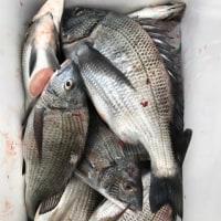 久々の釣り日和