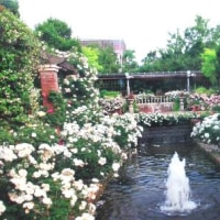 「輝く薔薇たちの庭」写真展