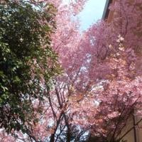 スポコミ・カワラ版 4月19日(水)先勝