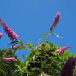 夏本番!ヒマワリの花咲く散歩道