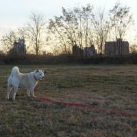 赤城おろしともうすぐクリスマスを迎える河原を風っ子・愛ちゃんと散歩したよ♪