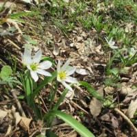 花のメドレー ~文殊山(60-37)