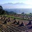 長野県・富士見町の「神戸の棚田」