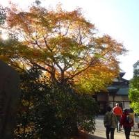 紅葉の高尾山(2)