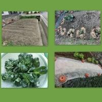 春植え野菜&バッグ