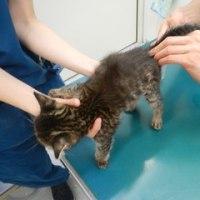 2匹で保護した子猫の風邪治療中