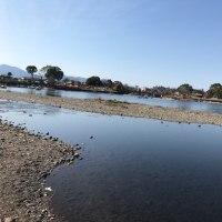 中江津湖(熊本市東区湖東)にてフライフィッシング