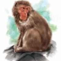 人権はあっても猿権は?