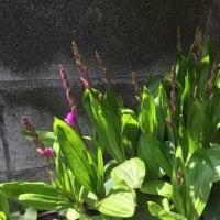 星薬科大の周りの草花