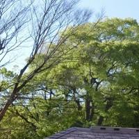桜も散って。。。 2017横浜 必塗マン