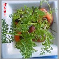 ヘタ野菜 人参