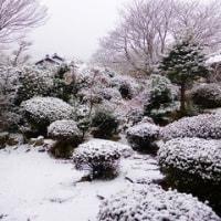 1月15日(日)大逮夜(おたんや)です!雪景色です!