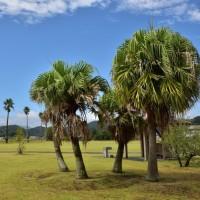 とても広くて芝生がきれいです。南国の公園らしいですね。 (Photo No.13752)