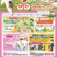 明日・明後日は矢掛町のドッグイベントです!