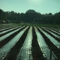 今朝の東京の畑。バスから🚌ね
