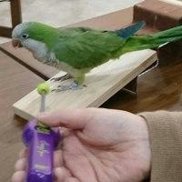 鳥のクリッカートレーニング 入門講座