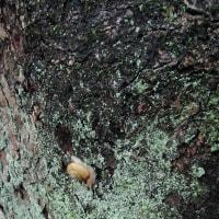 公園の木とかたつむり