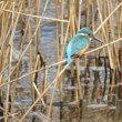 涸沼の冬鳥