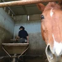 馬の仕事につくために アニベジ奮闘記 エピソード196