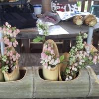 ブルーベリーの花・・・・
